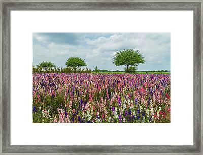 Larkspur Fields Forever Framed Print by Lynn Bauer