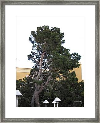 Las Vegas - Wynn Casino - 121212 Framed Print by DC Photographer