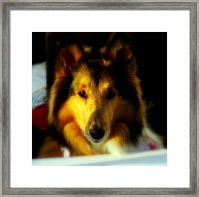 Lassie Come Home Framed Print by Karen Wiles