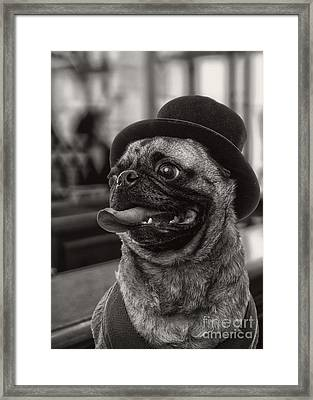 Last Call Pug Greeting Card Framed Print by Edward Fielding