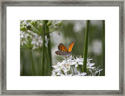 Last Days Of Summer Framed Print by Andrew Pacheco