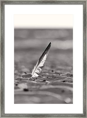 Last Days Of Summer In Black And White Framed Print by Sebastian Musial