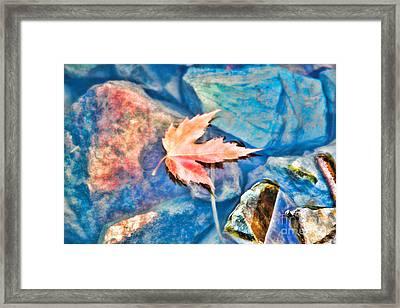 Last Fall  Framed Print by Cathy  Beharriell