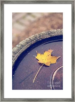 Last Leaf Of Autumn Framed Print by Diane Diederich