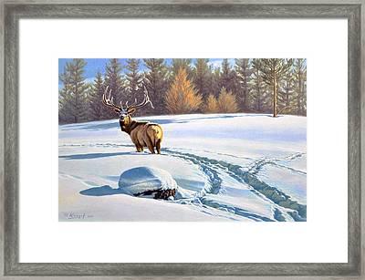Last Look  -elk Framed Print by Paul Krapf