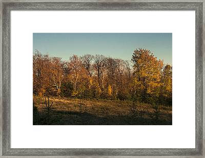 Last Rays Of Sun Framed Print by Philippe Boite