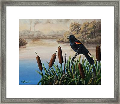 Last Song Framed Print by Crista Forest