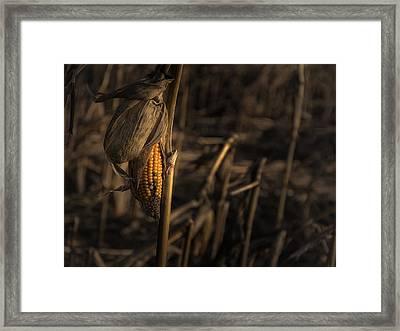 Last Year's Crop Framed Print by Chris Fletcher