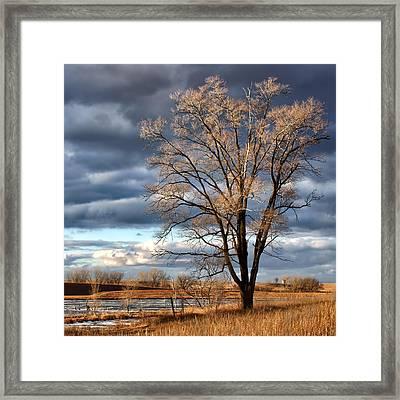 Late Afternoon At Walnut Creek Lake #1 Framed Print by Nikolyn McDonald