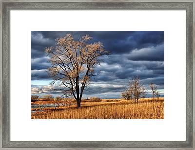 Late Afternoon At Walnut Creek Lake #2 Framed Print by Nikolyn McDonald
