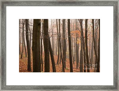 Late Autumn Beech Framed Print by Anne Gilbert