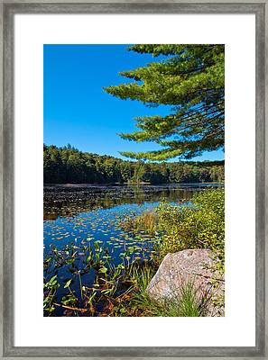 Late Summer On Cary Lake Framed Print by David Patterson