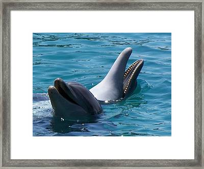 Laughing Dolphins Framed Print by Noreen HaCohen