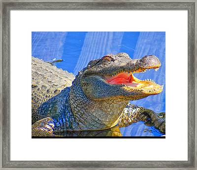 Laughing In The Morning Sun Framed Print by Dennis Dugan