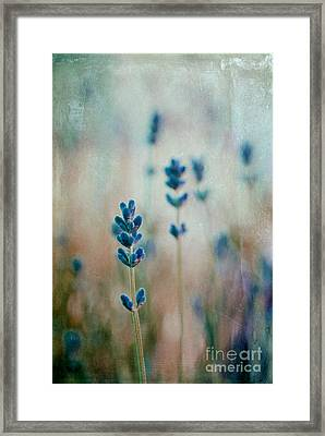 Lavandines 02 - 222t03 Framed Print by Variance Collections