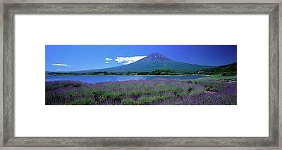 Lavender And Lake Kawaguchi Yamanashi Framed Print by Panoramic Images