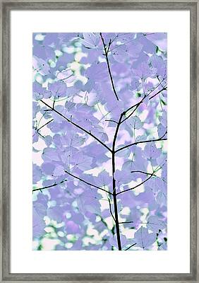 Lavender Blues Leaves Melody Framed Print by Jennie Marie Schell