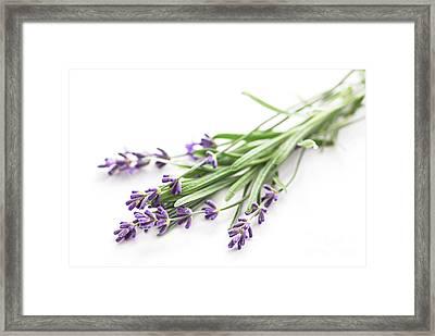 Lavender Framed Print by Elena Elisseeva