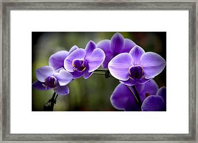 Lavender Rainbow Framed Print by Karen Wiles