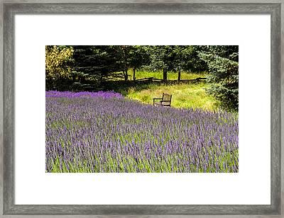Lavender Rest Framed Print by Kathy Bassett