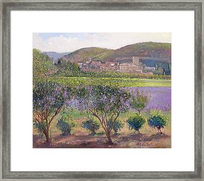 Lavender Seen Through Quince Trees Framed Print by Timothy  Easton