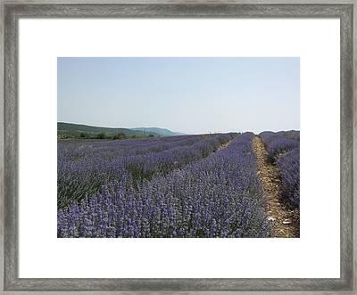 Lavender Sky Framed Print by Pema Hou