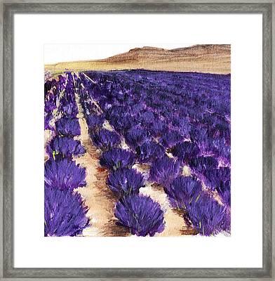 Lavender Study - Marignac-en-diois Framed Print by Anastasiya Malakhova
