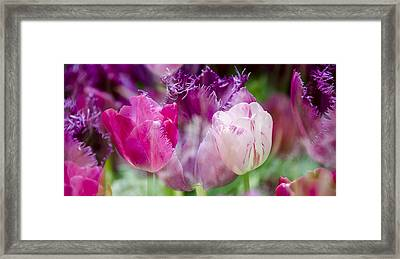 Layers Of Tulips II Framed Print by Penny Lisowski