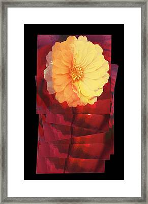 Layers Of Yellow Flower Framed Print by Susan Stone