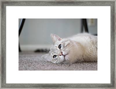 Lazy Day Framed Print by Matt Radcliffe