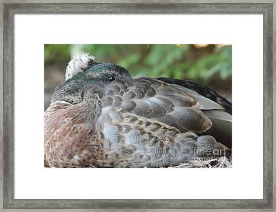 Lazy Day Framed Print by Tricia Goode