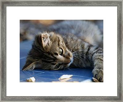 Lazy Days Framed Print by Camille Lopez