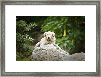 Lazy Dog Framed Print by Aged Pixel