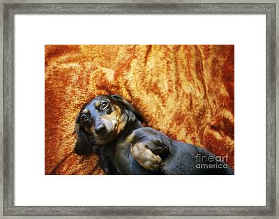 Lazy Dog Framed Print by Angel  Tarantella