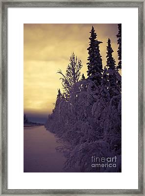 Lead The Way Framed Print by Lisa Killins