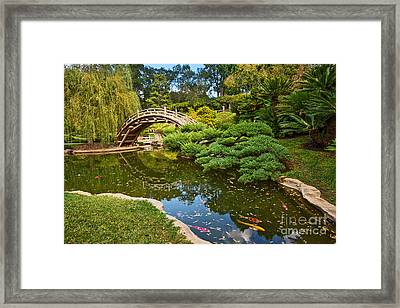 Lead The Way - The Beautiful Japanese Gardens At The Huntington Library With Koi Swimming. Framed Print by Jamie Pham