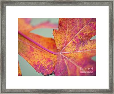 Leaf Abstract In Pink Framed Print by Irina Wardas