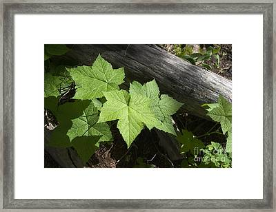 Leaf And Log Framed Print by J L Woody Wooden