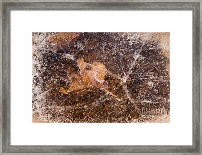 Leaf In Ice Framed Print by Anne Gilbert