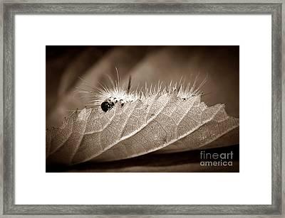 Leaf Muncher Framed Print by Luke Moore