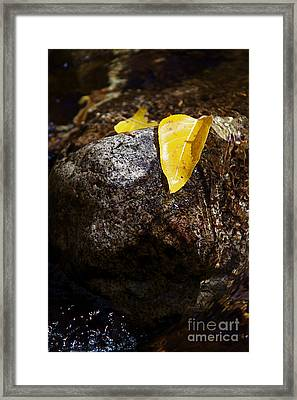 Leaf On Rock Framed Print by ELITE IMAGE photography By Chad McDermott