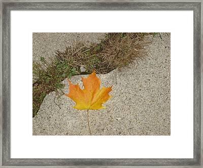 Leaf On Sidewalk Framed Print by David Fiske