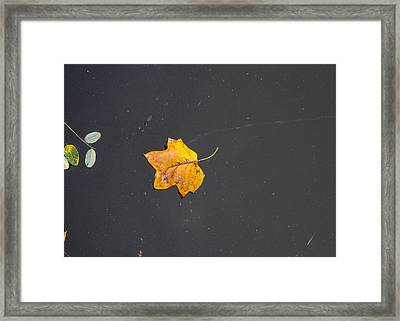 Leaf On Water Study  Framed Print by Tim Fitzwater