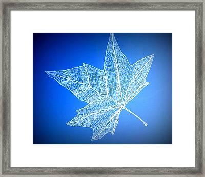 Leaf Study 3 Framed Print by Cathy Jacobs