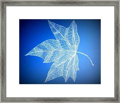 Leaf Study 5 Framed Print by Cathy Jacobs
