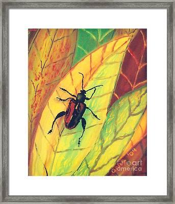 Leaf Surfer Framed Print by Anna Skaradzinska