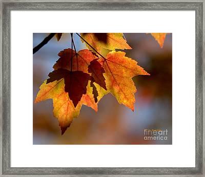 Leaf Upon Leaves Framed Print by Yvette Radcliffe