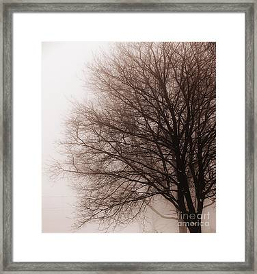 Leafless Tree In Fog Framed Print by Elena Elisseeva