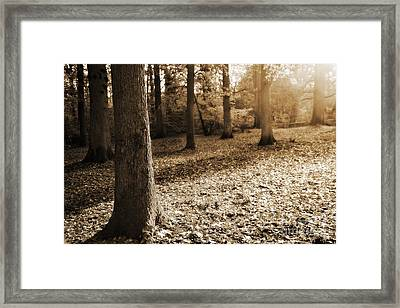 Leafy Autumn Woodland In Sepia Framed Print by Natalie Kinnear