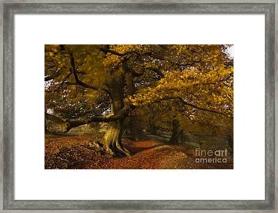 Leafy Lane Framed Print by Anne Gilbert